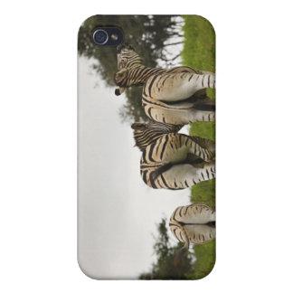 3頭のシマウマの裏側、南アフリカ共和国 iPhone 4 ケース