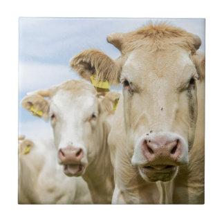 3頭の茶色牛 タイル
