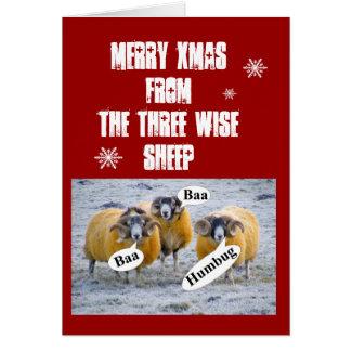 3頭の賢いヒツジからのメリークリスマス カード