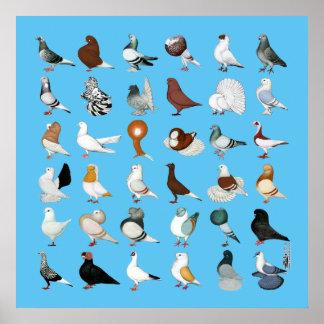 36匹のハト品種 ポスター