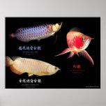 3 Types of Asian Arowanaのポスター ポスター
