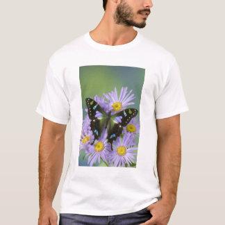 4の蝶のSammamishワシントン州の写真 Tシャツ