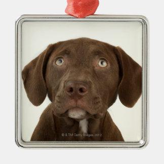 4ヶ月のチョコレート実験室の子犬のポートレート メタルオーナメント