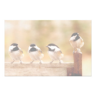 4匹のかわいい《鳥》アメリカゴガラ 便箋