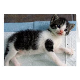4週間の古い子ネコ グリーティングカード