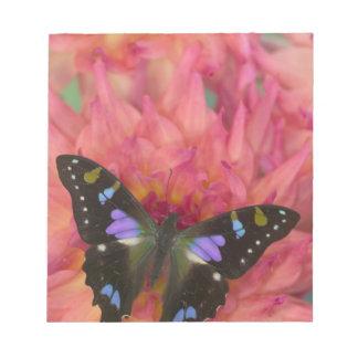 5の蝶のSammamishワシントン州の写真 ノートパッド