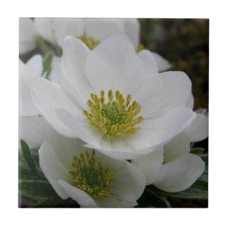 5月の花、アネモネのnarcissiflora タイル