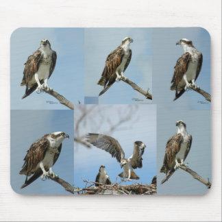 6ミサゴの鳥の写真のマウスパッド マウスパッド