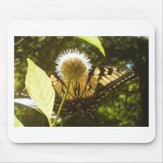 6月の黄色い(昆虫)オオカバマダラ、モナークの花のマウスパッド マウスパッド