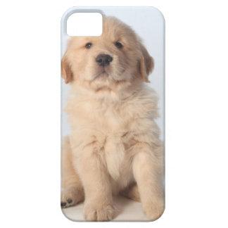 6週間の古いゴールデン・リトリーバーの子犬のポートレート iPhone 5 ベアリーゼアケース