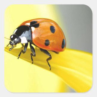 7つの点のてんとう虫はヒマワリで散歩します スクエアシール