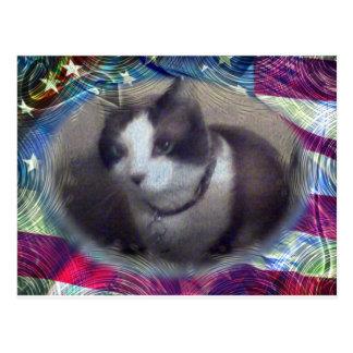 7月4日の子猫 ポストカード