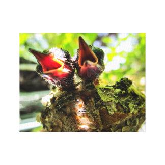 8羽の初生Rufousハチドリのキャンバス キャンバスプリント