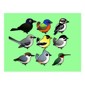9羽の南東米国の裏庭の鳥 ポストカード