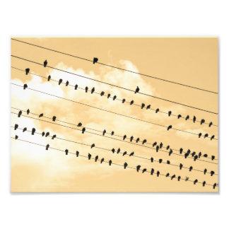 91 (1)鳥 フォトプリント