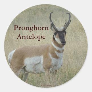 A0008 Pronghornのカモシカ ラウンドシール