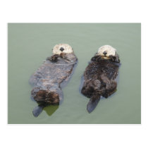 A couple of sea otters taking a nap はがき