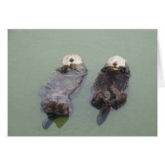A couple of sea otters taking a nap グリーティングカード