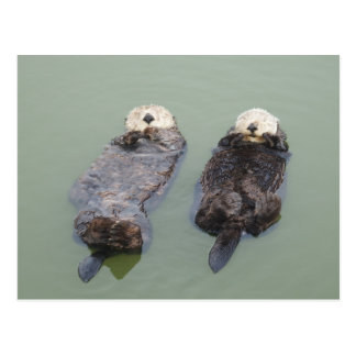 A couple of sea otters taking a nap ポストカード