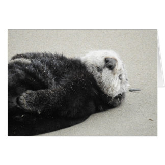 A dreaming sea otter カード