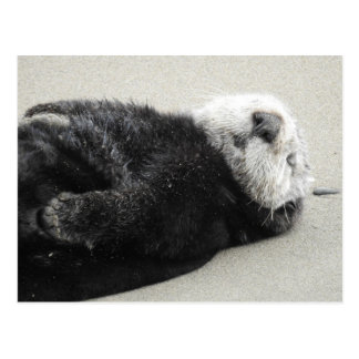 A dreaming sea otter ポストカード