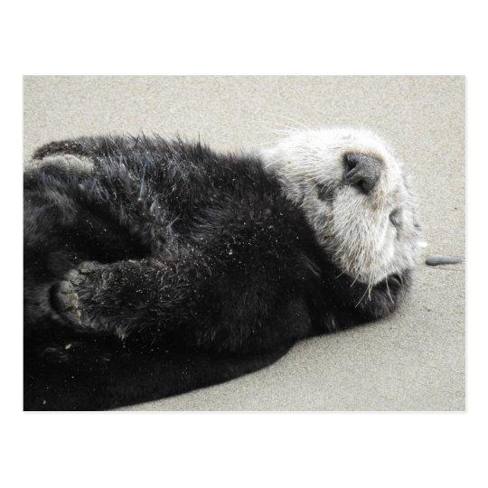 A dreaming sea otter ポストカード