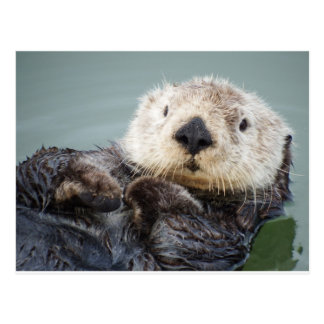 A sea otter chilling out in the water はがき