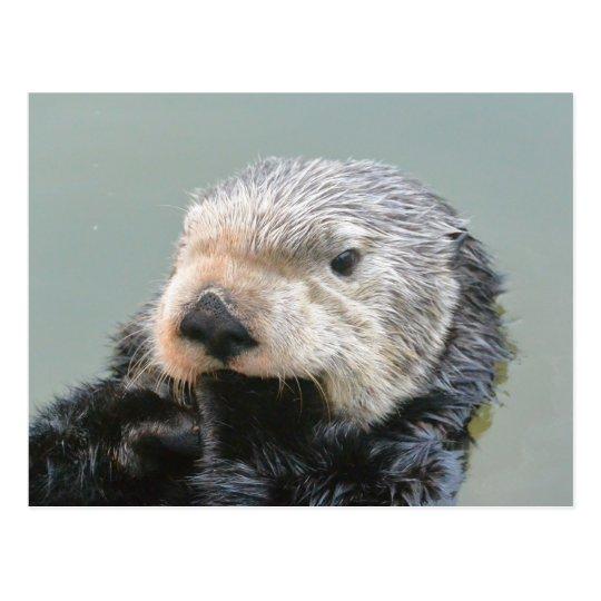 A sea otter philosopher ポストカード
