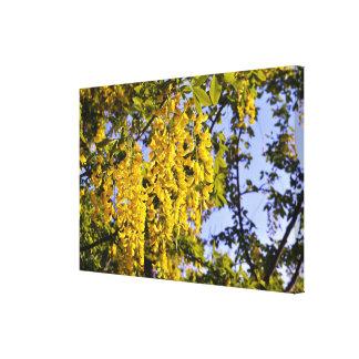 Accaciaの黄色い木によってはゴトランドの島スウェーデンが開花します キャンバスプリント