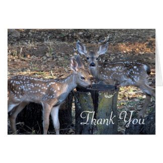 Adorable Spotted Fawns Thank You Note Card カード