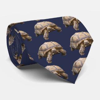 African spurred tortoise タイ