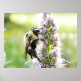 Agastacheの花の《昆虫》マルハナバチ ポスター