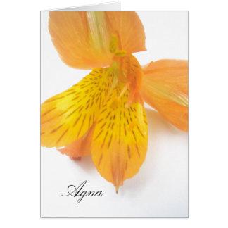 Agnaの一流のギフト カード