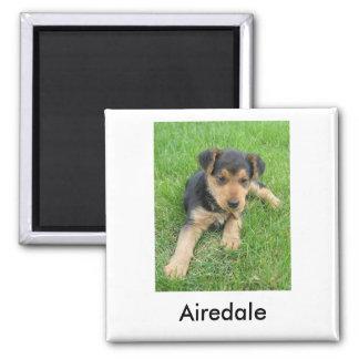Airedaleの子犬の磁石 マグネット