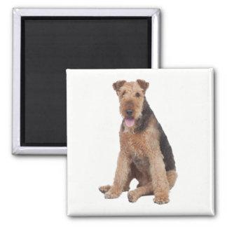 Airedaleテリアブラウン及び黒い小犬 マグネット