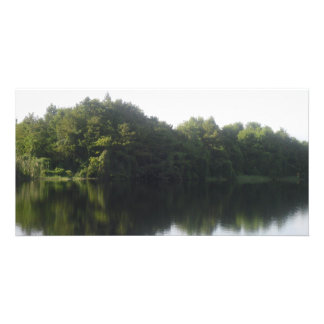alligator湖 カード