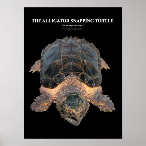 Alligator snapping turtle のポスター ポスター