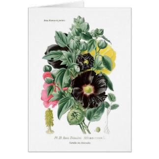 Althaeaのrosea (Hollyhock) カード