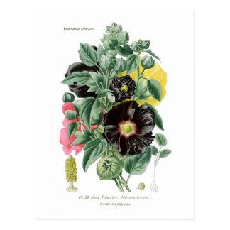 Althaeaのrosea (Hollyhock) ポストカード