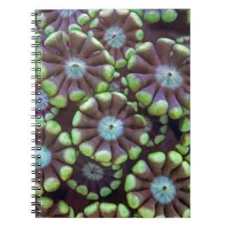 Alveoporaパターン ノートブック