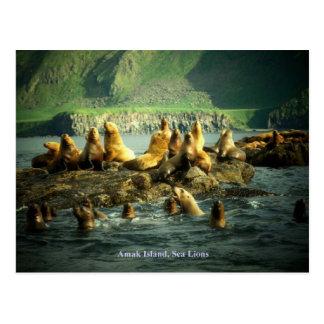 Amakの島のアシカ ポストカード