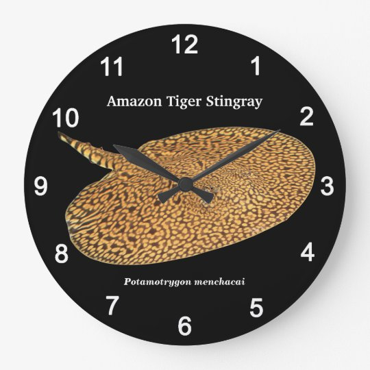 Amazon Tiger Stingray , Potamotrygon menchacai ラージ壁時計