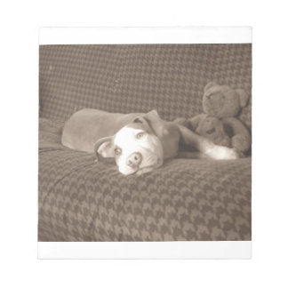 American_Pit_Bull_Terrier_and_teddy_bear_on_couch. ノートパッド