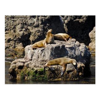 Anacapaの島、アシカ ポストカード