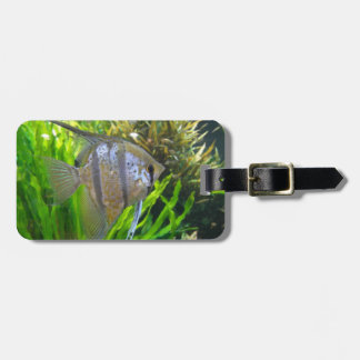 Angelfish ラゲッジタグ