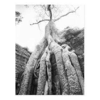 Angkorカンボジアの木Ta Prohm ポストカード