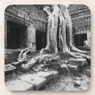 AngkorカンボジアのTa Prohmの木 コースター