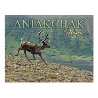 Aniakchakのカルデラ、アラスカのカリブーのランニング ポストカード