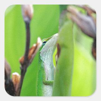 Anoleの緑のトカゲ スクエアシール