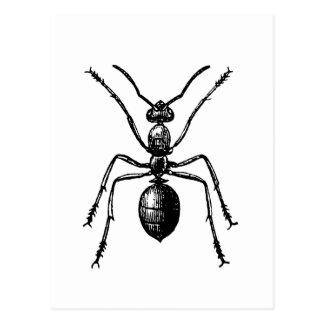 ant ポストカード